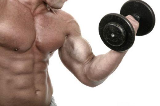 dambıl biceps