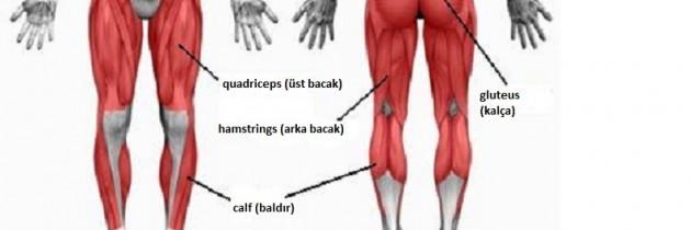 Evde Aletsiz Üst Bacak (Quadriceps), Arka Bacak (Hamstring) ve Calf (Baldır) Egzersizleri